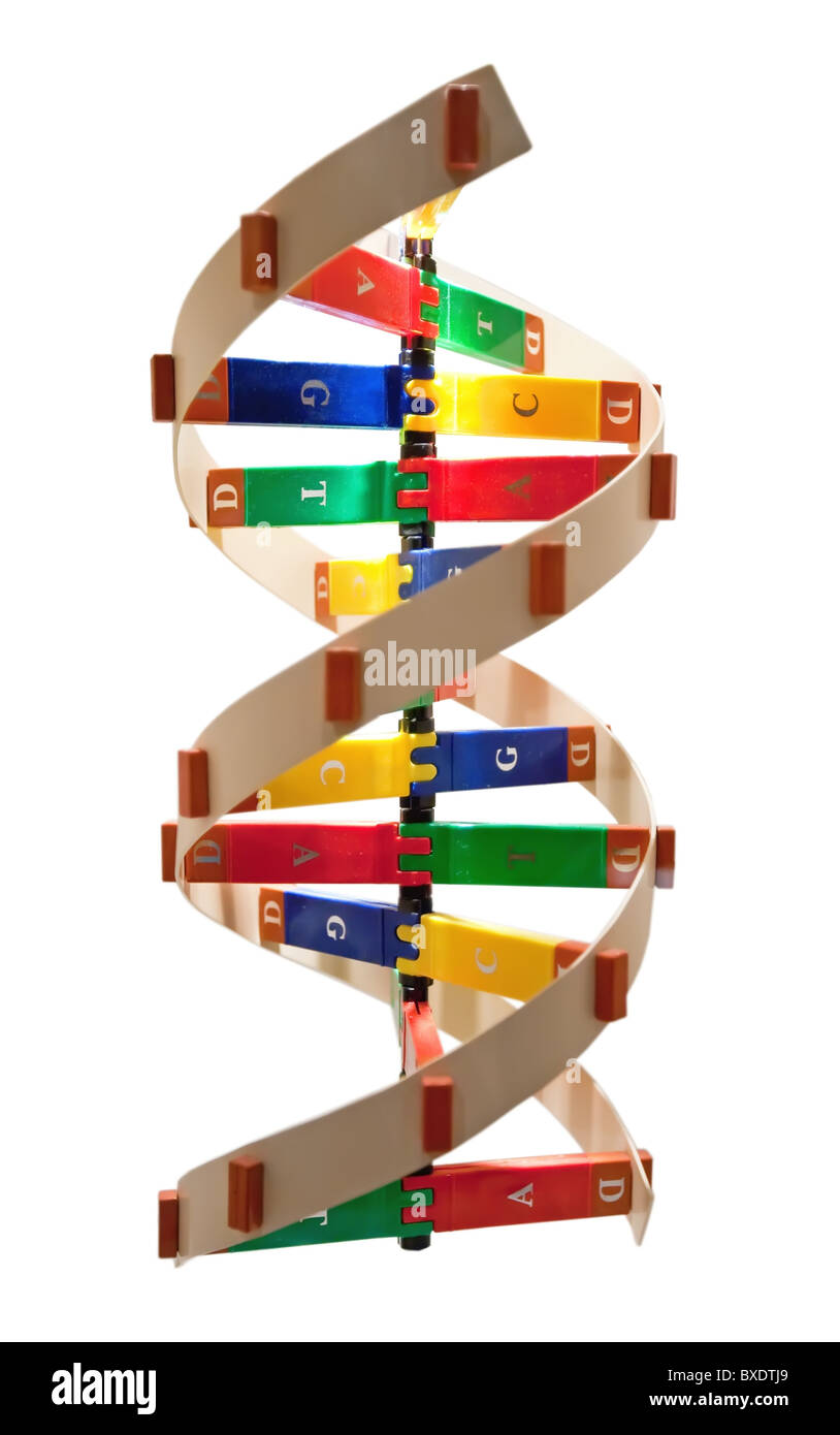 Die Struktur der DNA-Doppelhelix. Stockbild