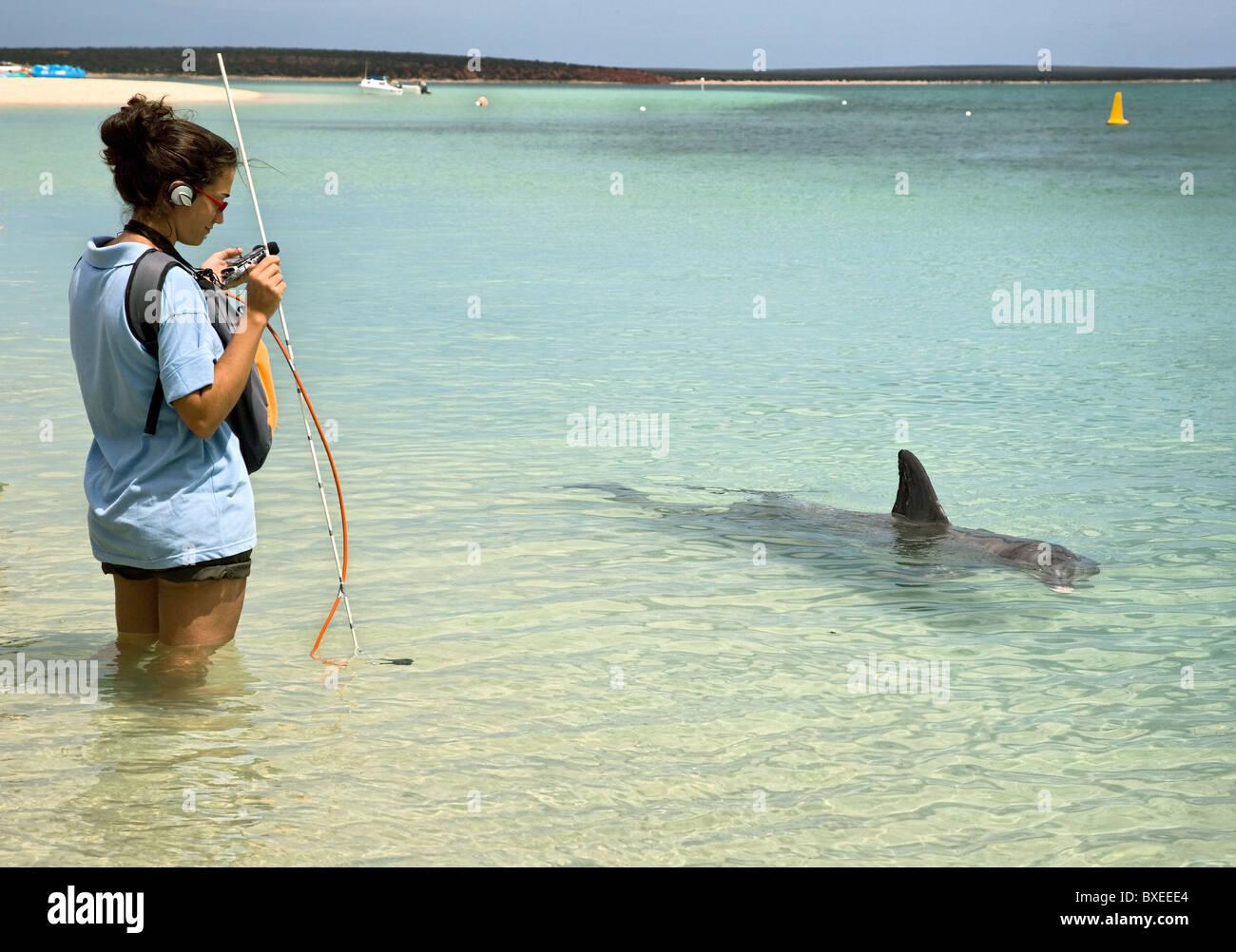 Frau mit sound Recording-Equipment Studium Echo Lage in Flasche Nase Delfine in Monkey Mia in Westaustralien Stockbild