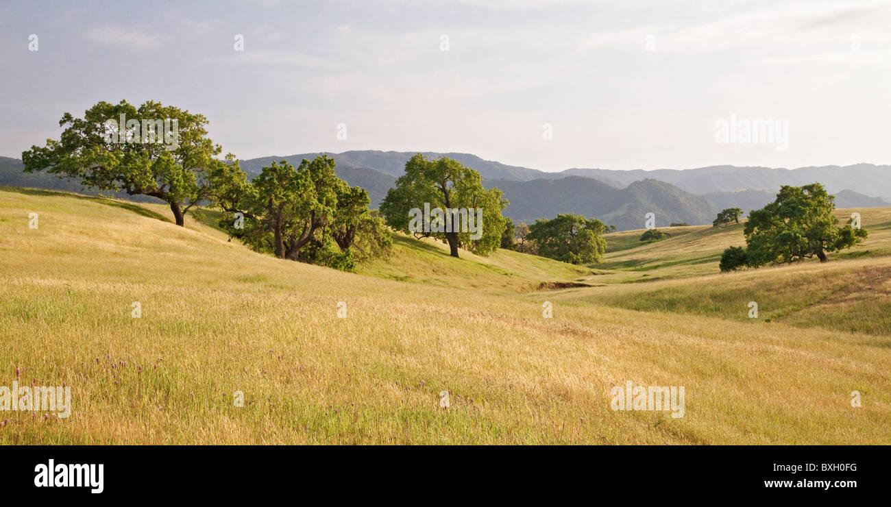 Coastal Ausläufern Eiche Savanne, Rüstung Ranch Road, in der Nähe von Santa Ynez, Santa Barbara County, Stockbild