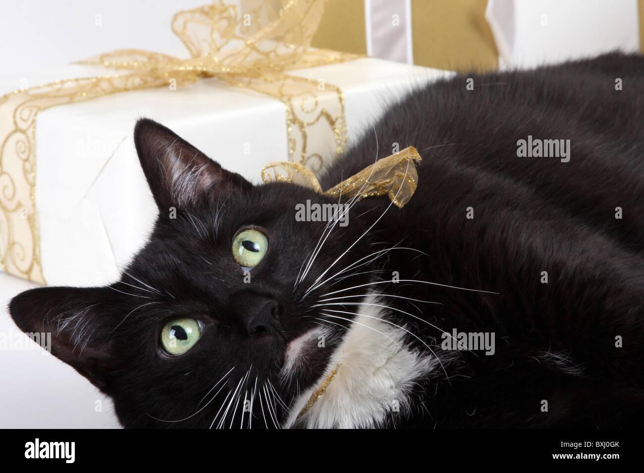 Schwarze Katze Die Umgeben Von Weihnachtsgeschenke Stockfoto Bild