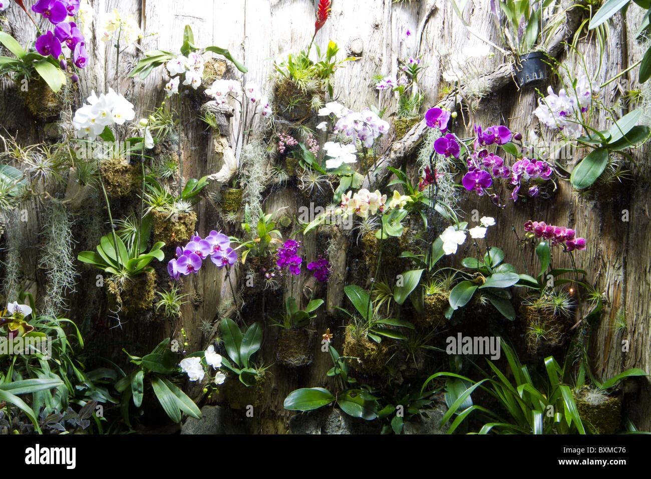 Tropische Pflanzen Im Garten: Topfabstandshalter