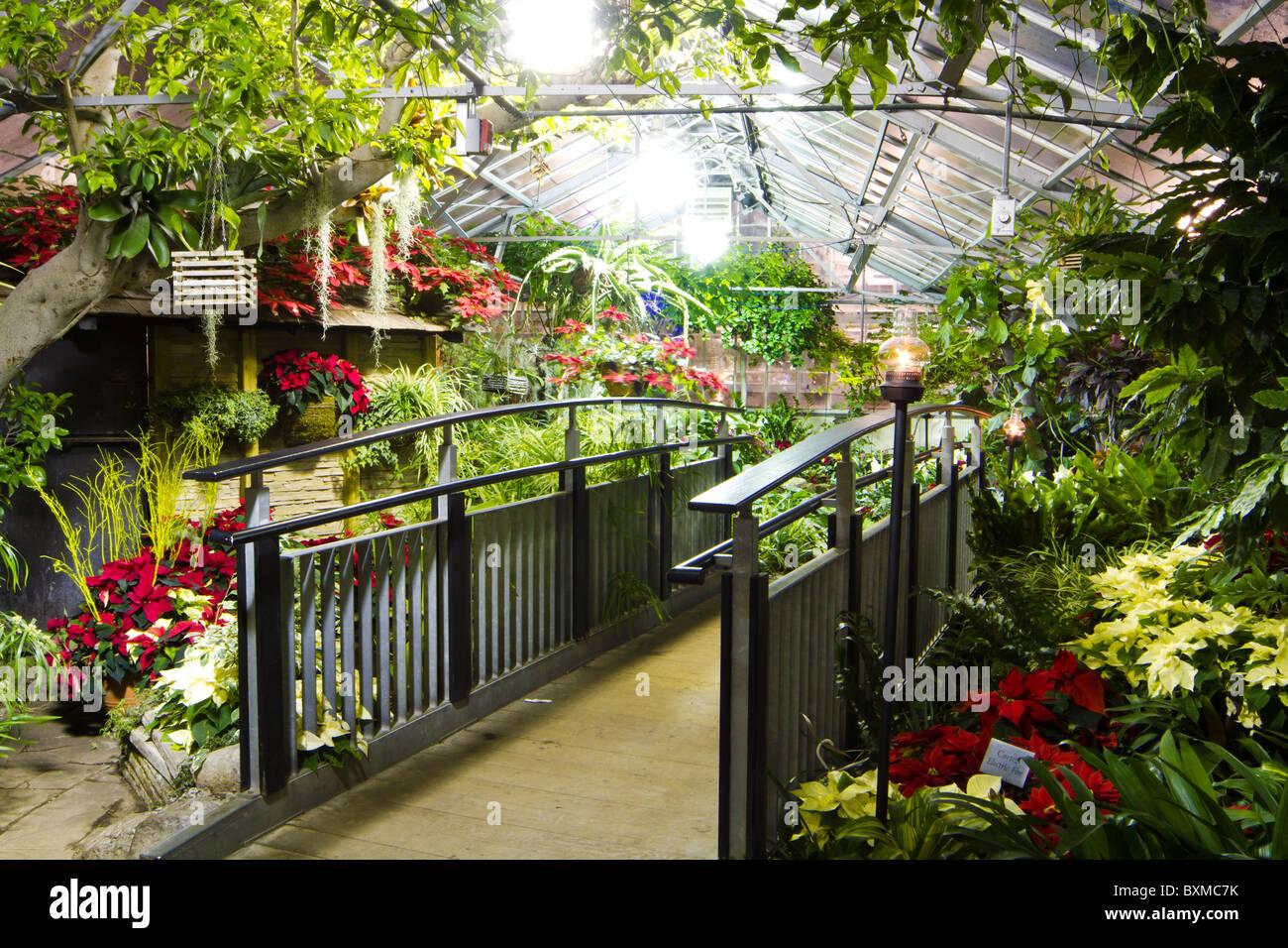 Tropischen garten gew chshaus pflanzen blumen stockfoto bild 33640087 alamy - Gewachshaus garten ...
