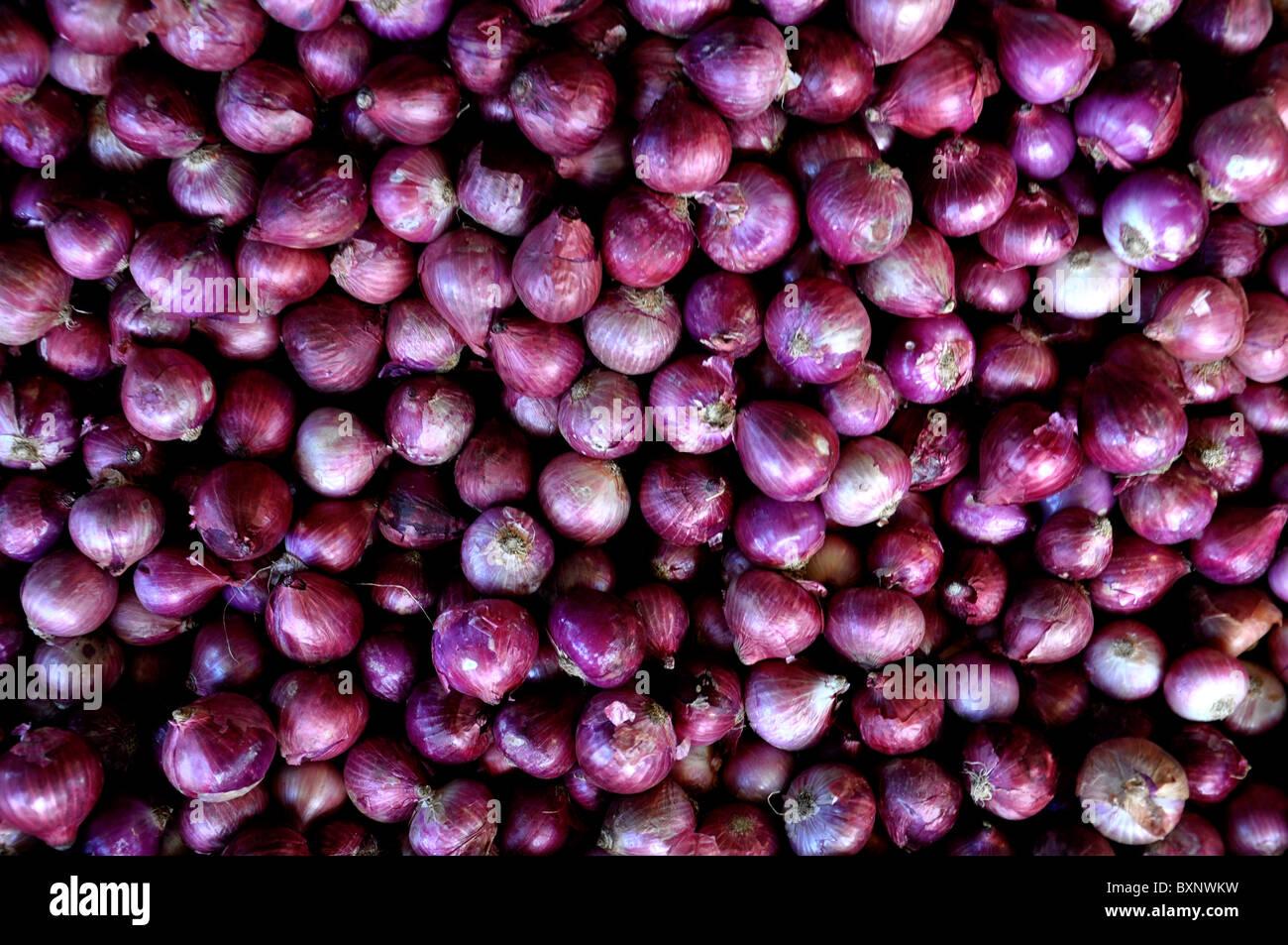 Zwiebeln (Allium Cepa) Stockbild