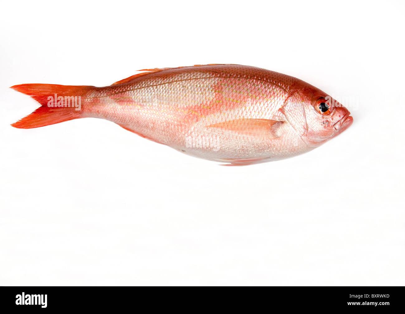 Schnappfisch