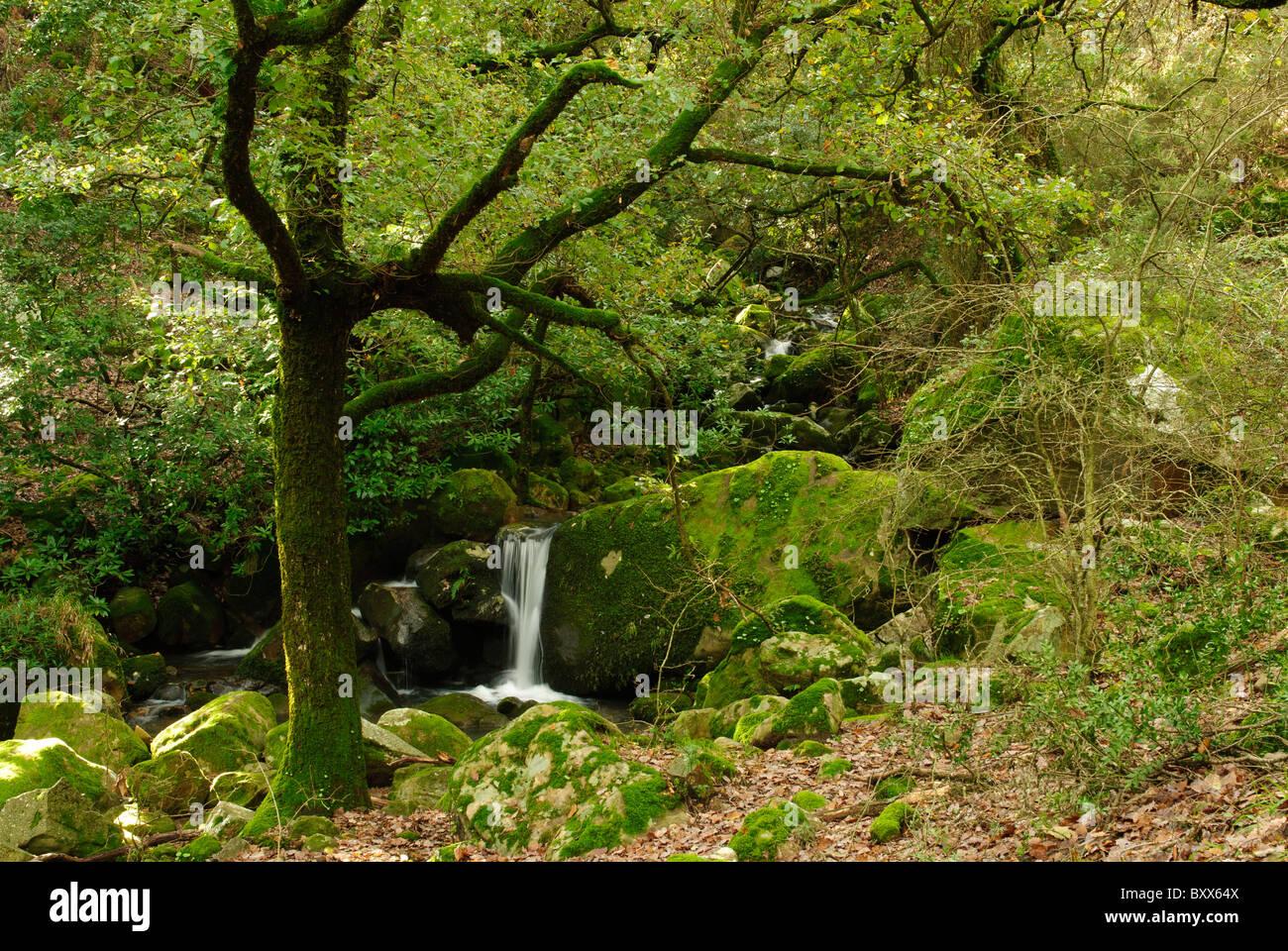 Paisaje de Los Bosques de Los Alcornocales. Stockbild