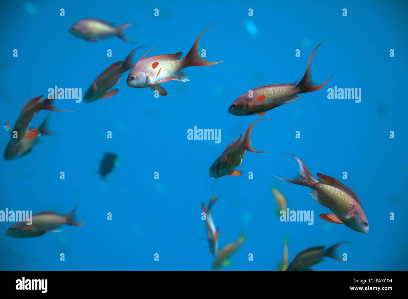 Fein Fische Färben Druckbare Seiten Fotos - Malvorlagen Von Tieren ...