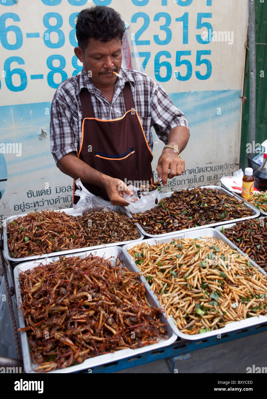 Insect food thailand stockfotos insect food thailand for Verkauf von mobeln