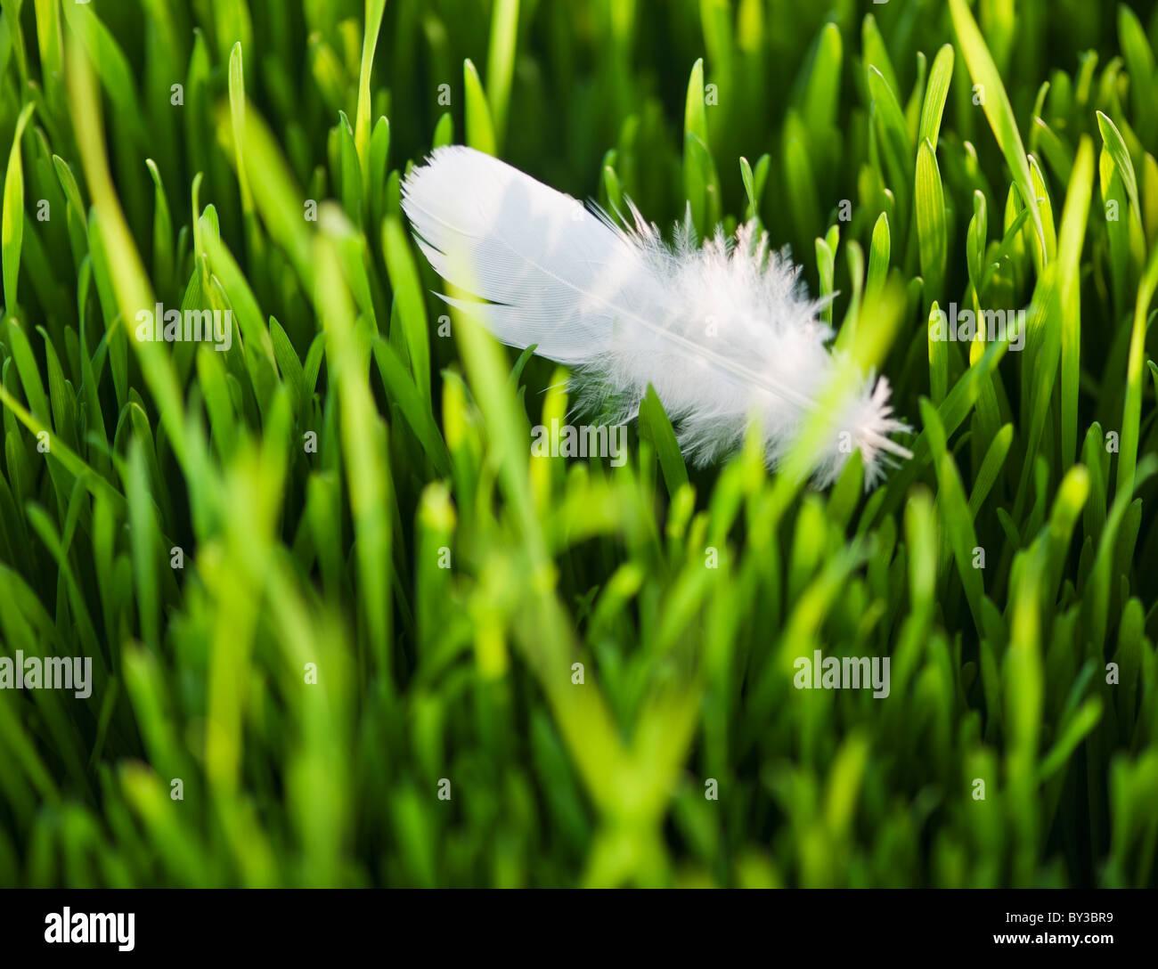 USA, New Jersey, Jersey City, Nahaufnahme des White Feather Gras Stockbild
