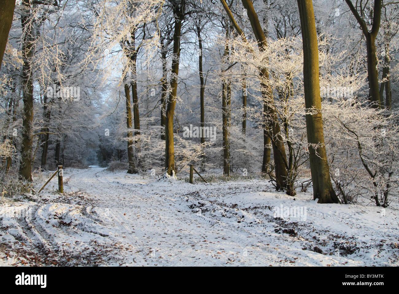 Winter-Wunderland frostigen Waldweg magische Raureif Buckinghamshire Chilterns Stockfoto