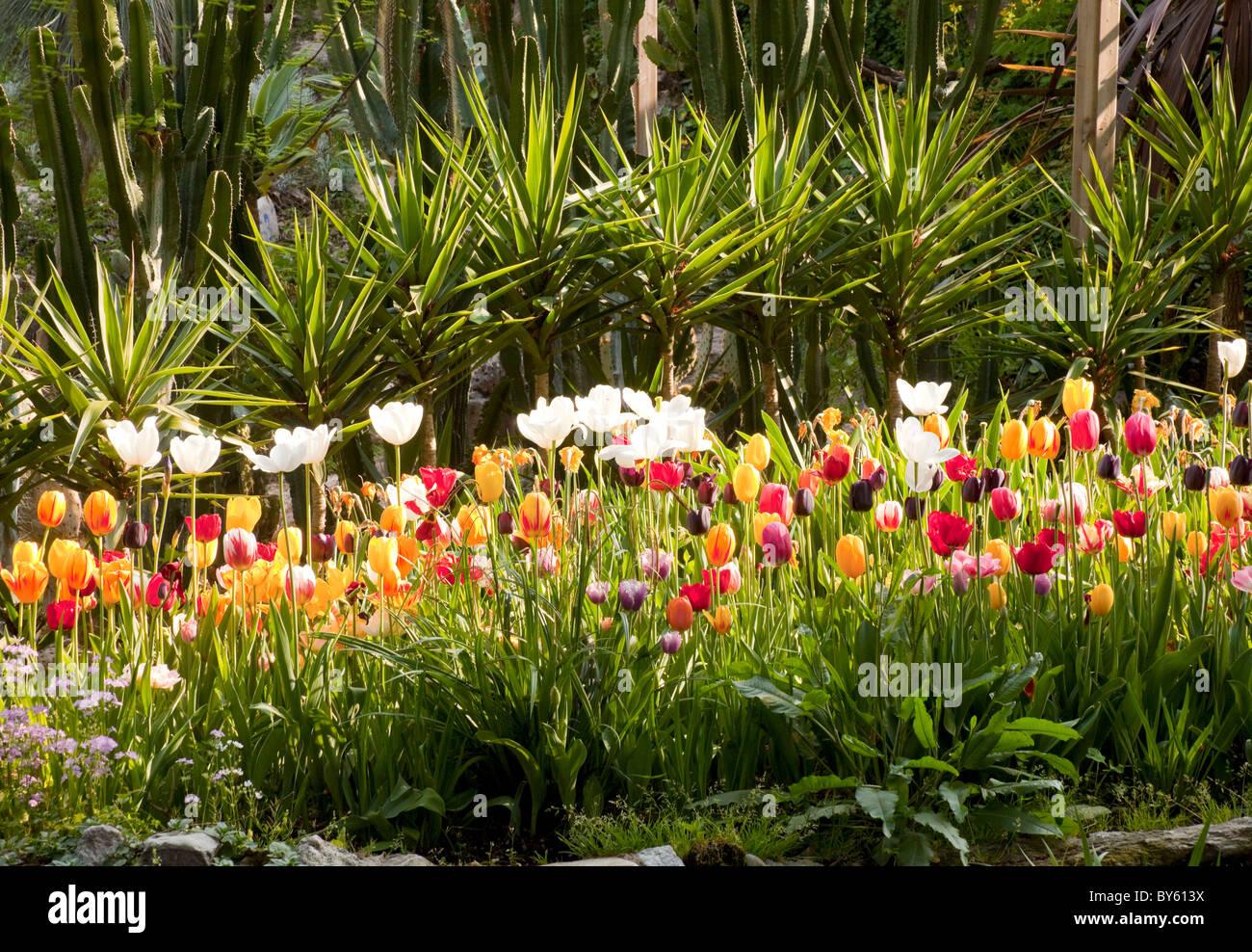 Bett Von Tulpen Und Subtropischen Pflanzen In Andre Heller