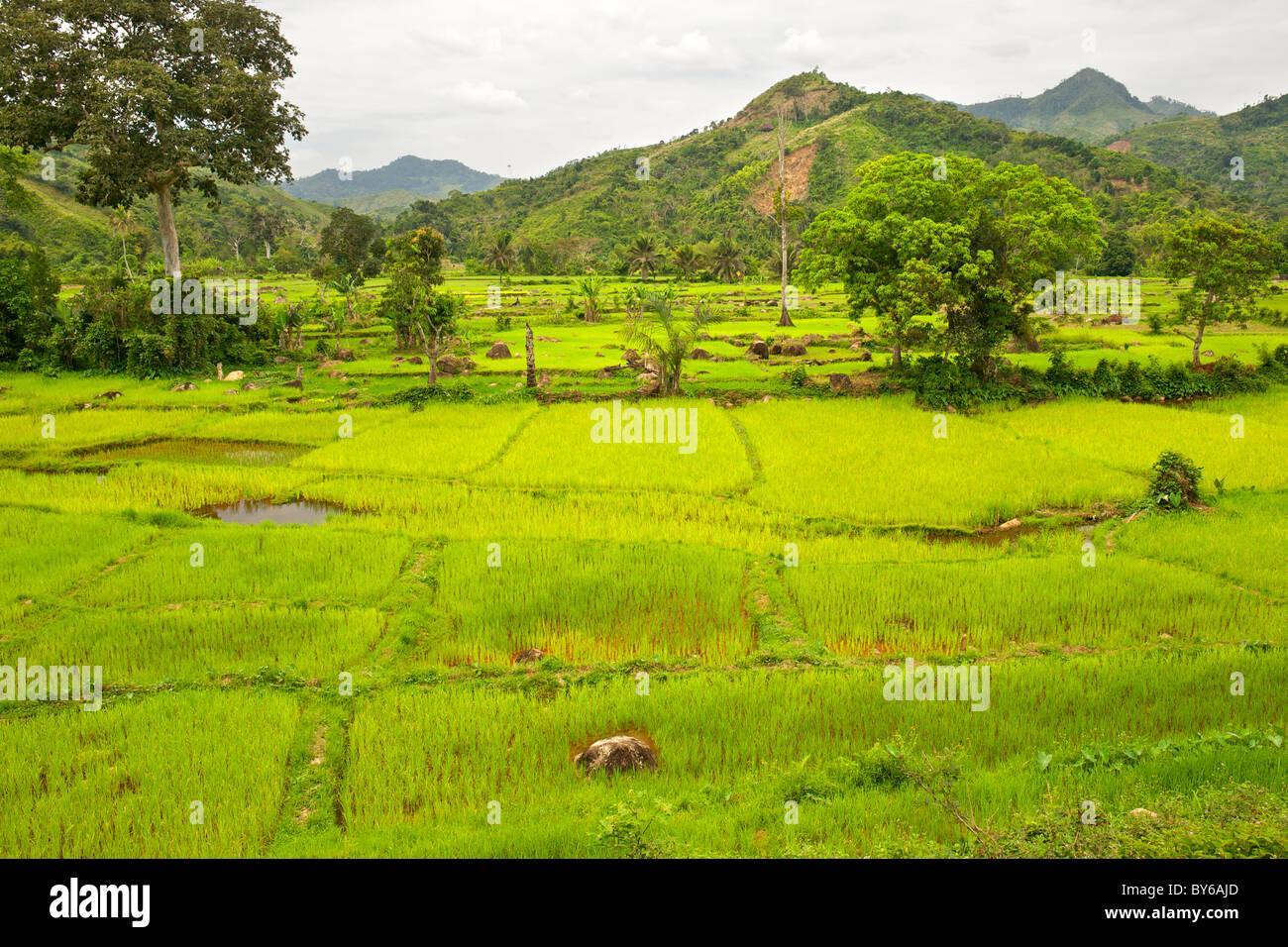 Blick auf die üppige Landschaft und grünen Reis Paddy Plantagen an der Grenze der Marojejy Nationalpark Stockbild