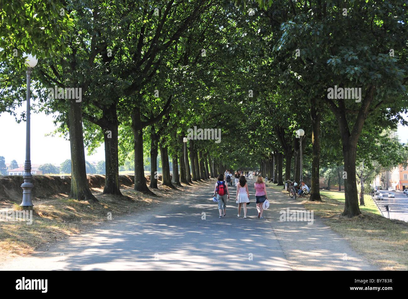 Schattigen Spaziergang entlang der Viale Delle Mura Urbane, Lucca Stockbild