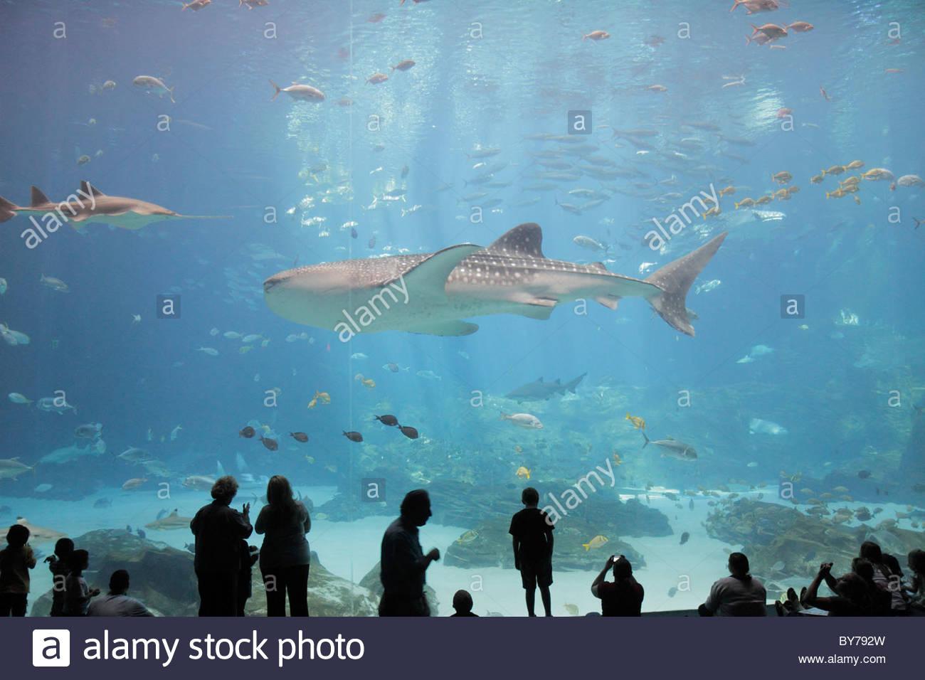 Aquarium whale tank stockfotos aquarium whale tank for Salzwasser aquarium fische