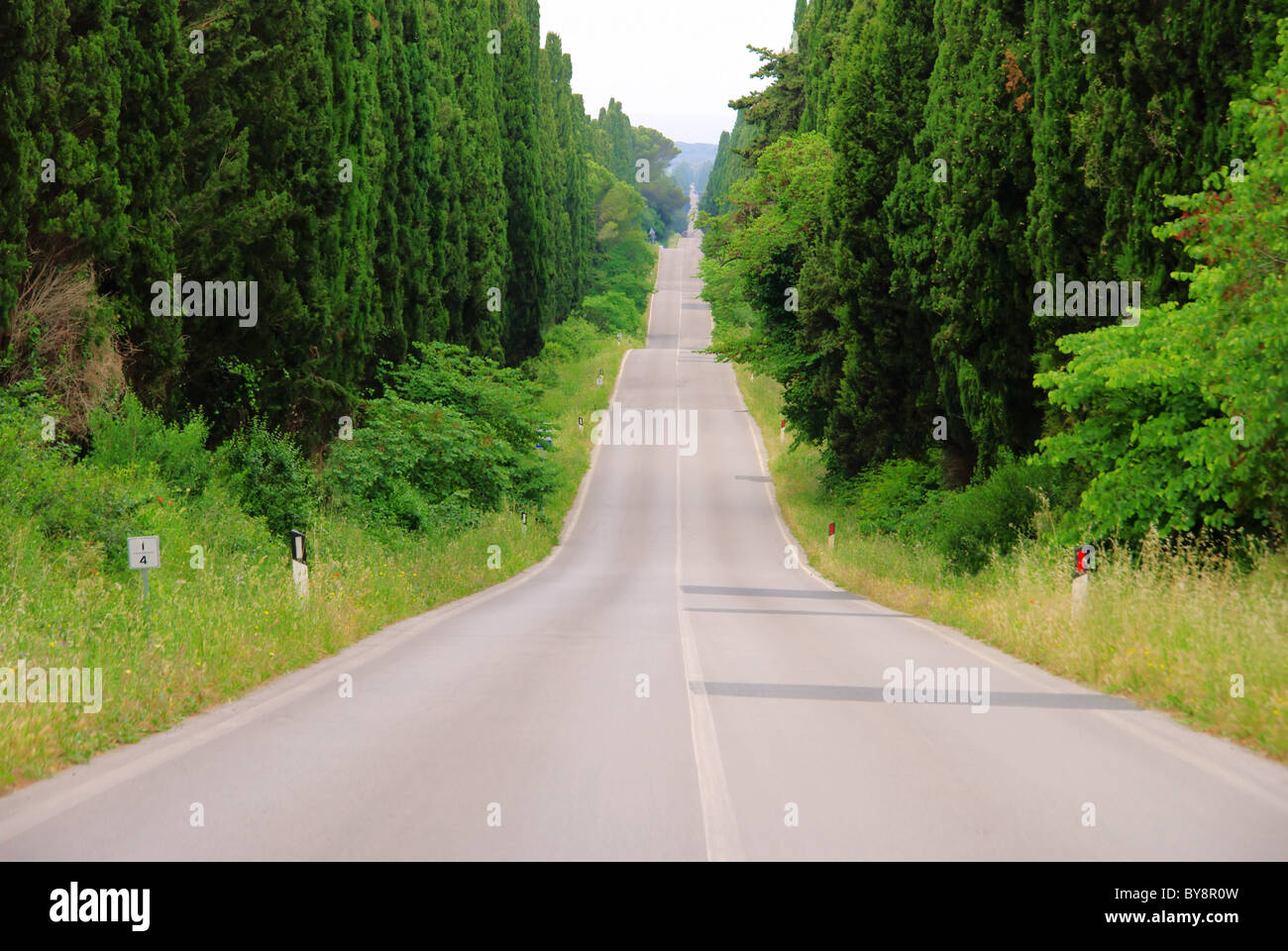 Zypressenallee Laengste saufen - längste Zypressenallee aus Italien 01 Stockbild