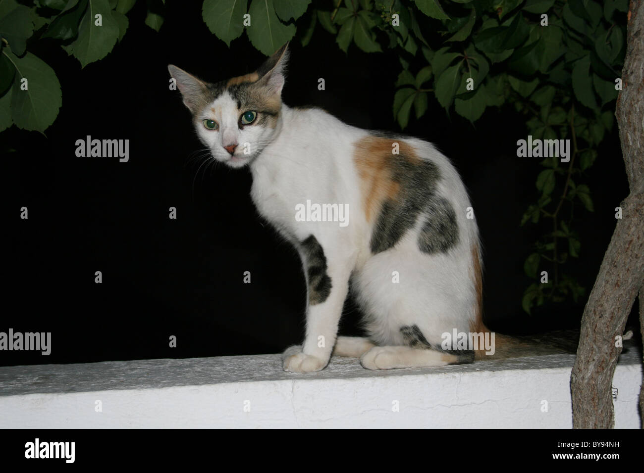 Katze saß auf Mauer Stockfoto