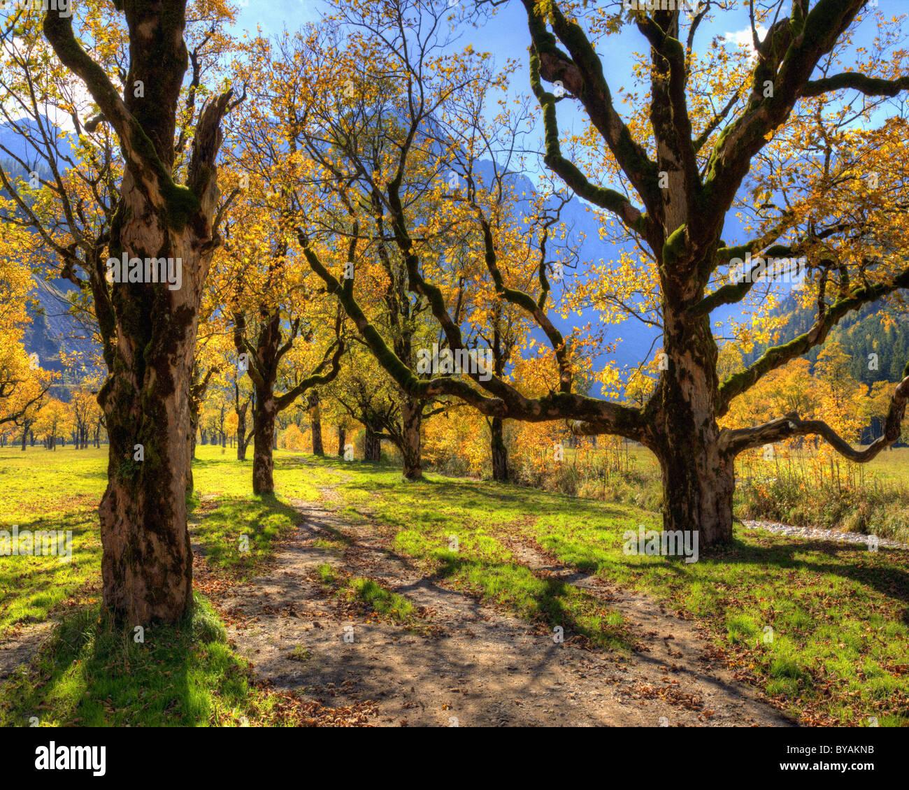 AT - Tirol: Großer Ahornboden (HDR-Bild) Stockbild