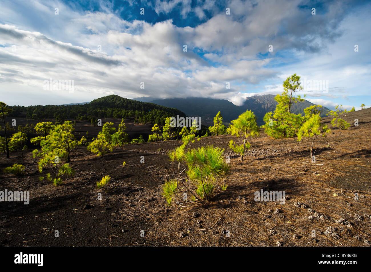 Schöne Lavalandschaft auf der Cumbre Nueva in La Palma, Kanarische Inseln, Spanien Stockbild