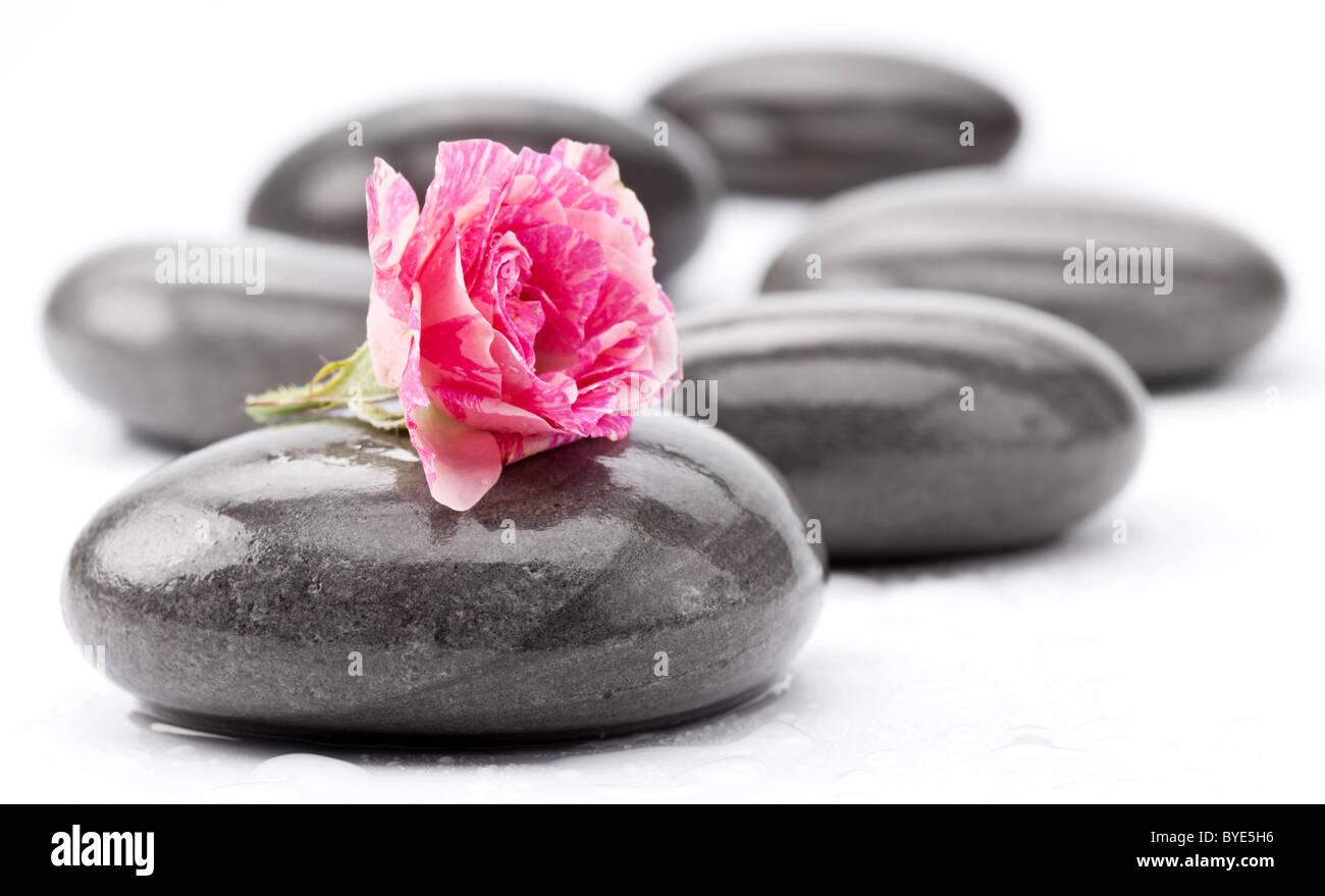 Spa-Steinen mit rose Blume auf einem weißen Hintergrund. Stockbild