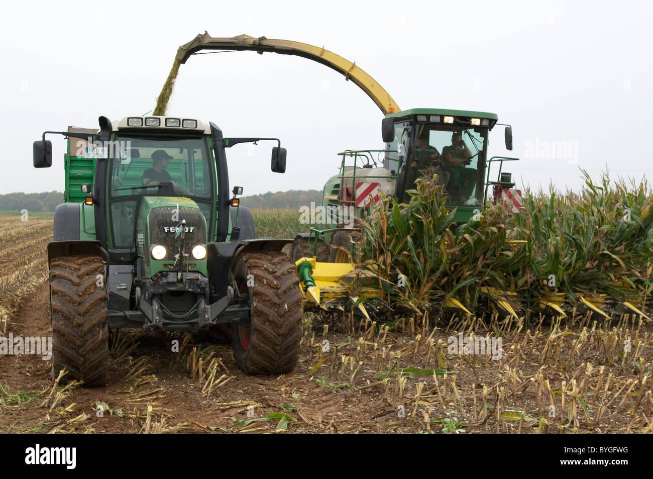 Mais, Mais (Zea Mays). Ernte von Mais. Ein Traktor mit einem Anhänger, die neben einem selbstfahrenden Feldhäcksler Stockbild