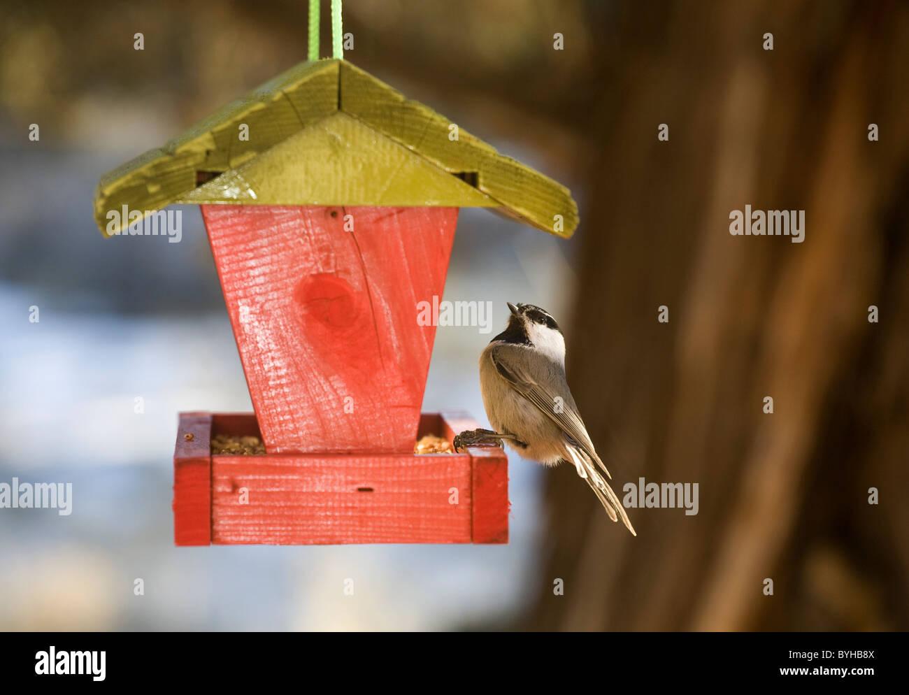 Eine Meise in ein Vogelhaus Stockbild