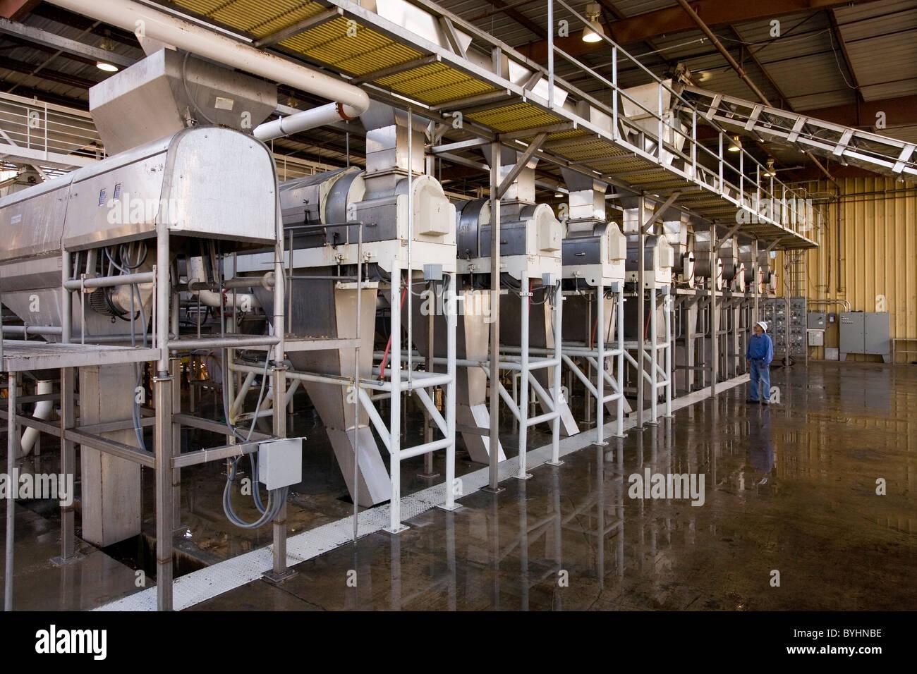 Landwirtschaft nuss trockner bei pistazien verarbeitungsanlage