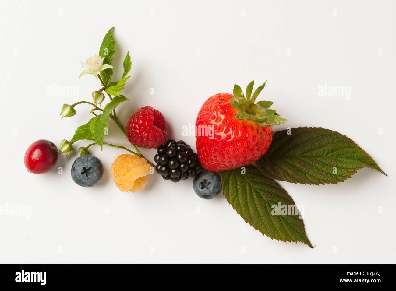 Mischung aus Beeren: Erdbeere, rote und goldene Himbeeren, Brombeere, Heidelbeere und Cranberry mit Blättern Stockbild