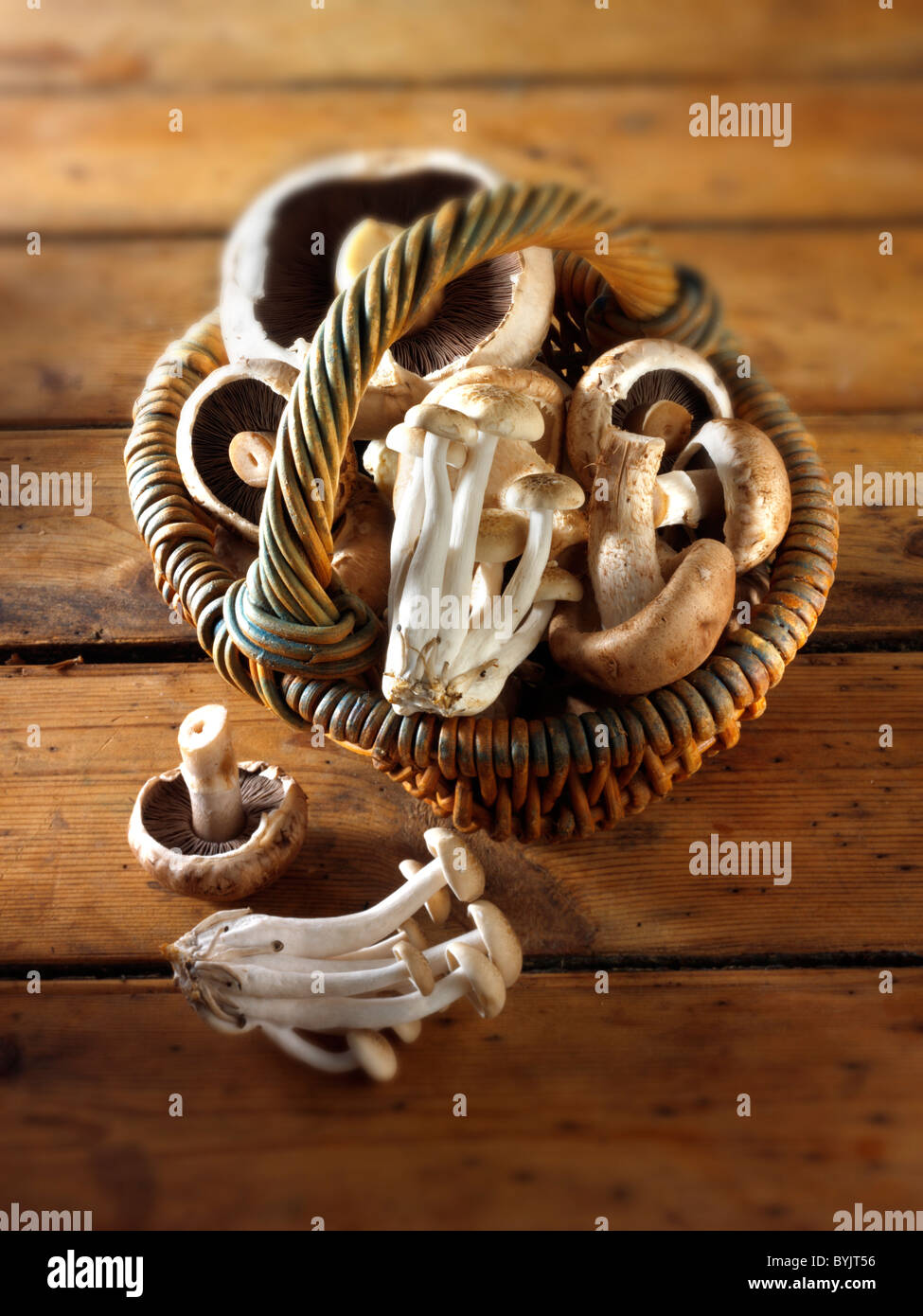Frische Pilze Stockbild
