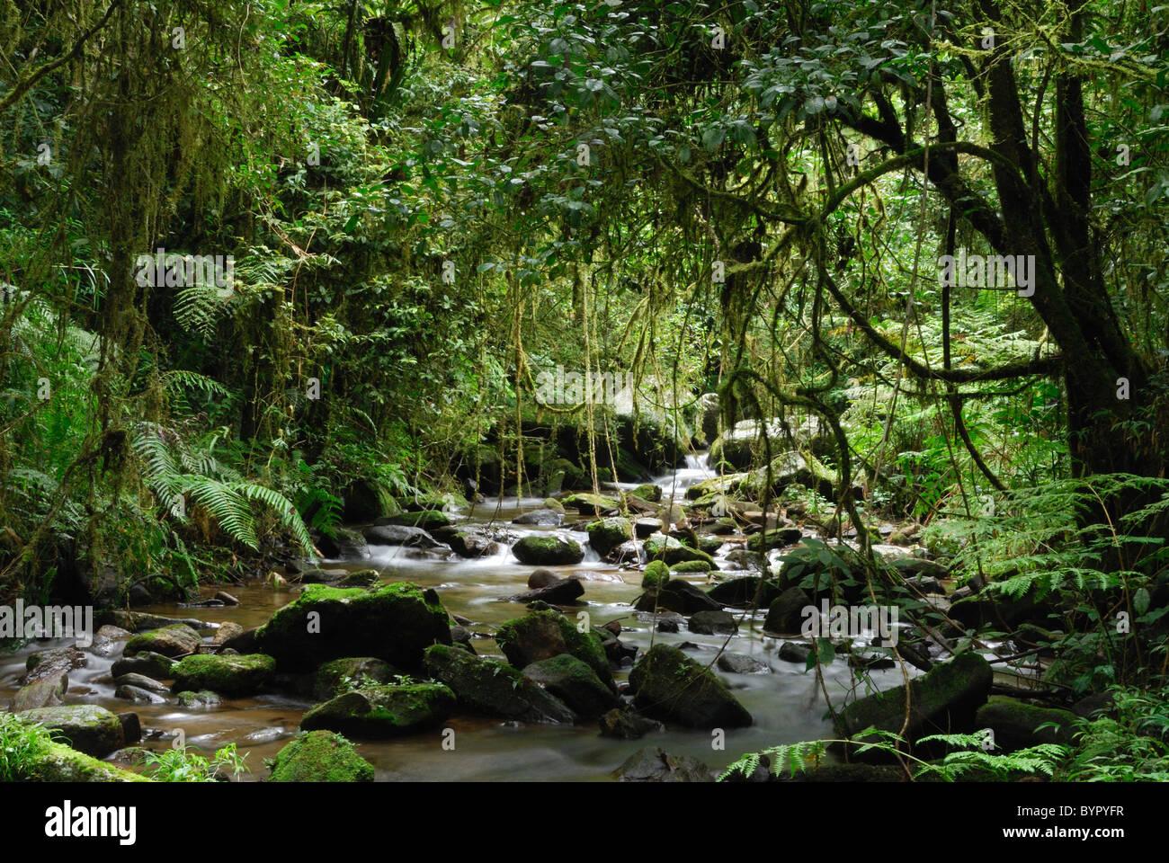 Ein Stream im Regenwald von Ranomafana Nationalpark, Madagaskar. Stockbild