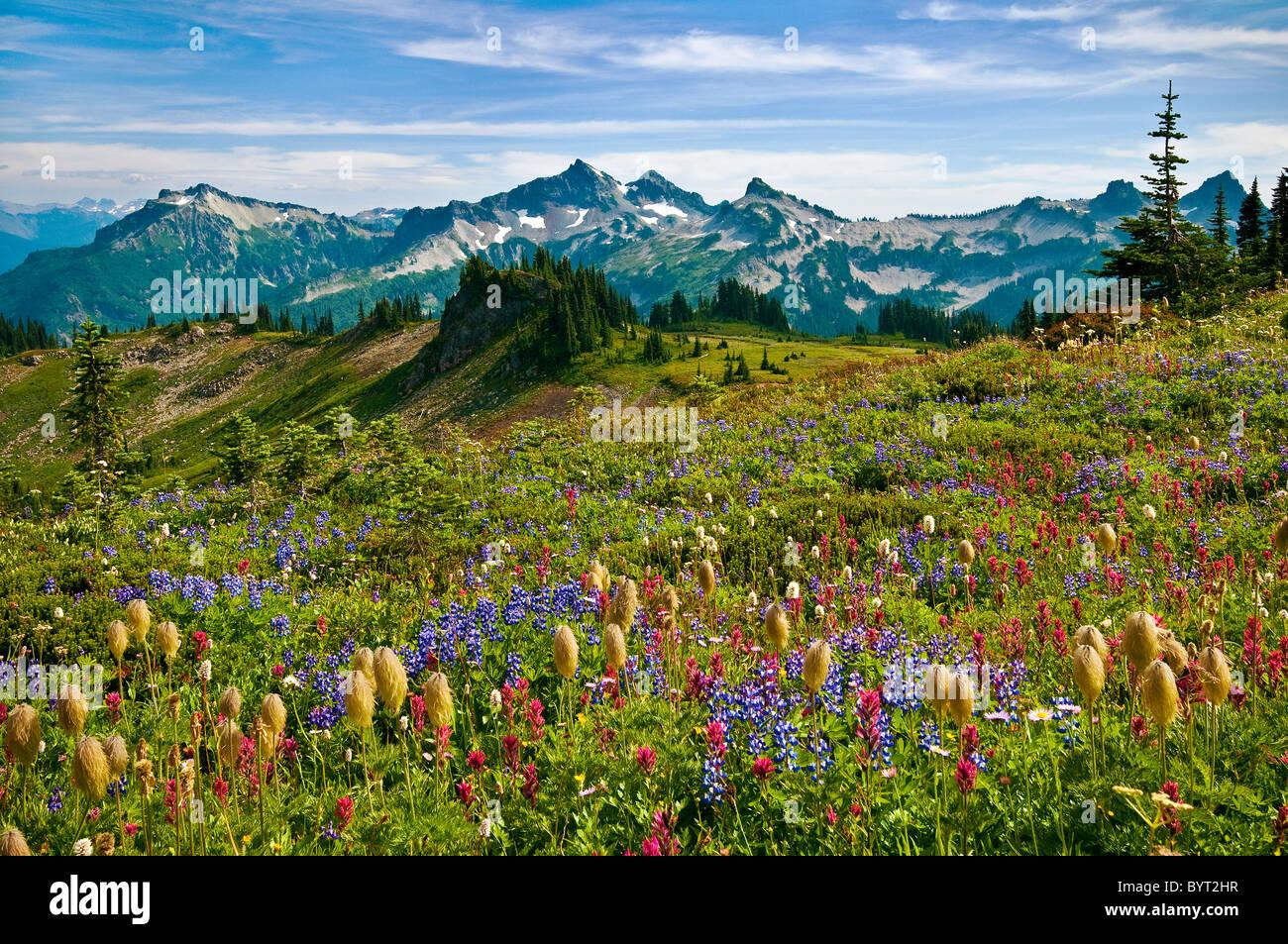 Wildblumen Wiese und Blick auf Tatoosh Range vom Skyline Trail im Paradies; Mount Rainier Nationalpark, Washington. Stockfoto