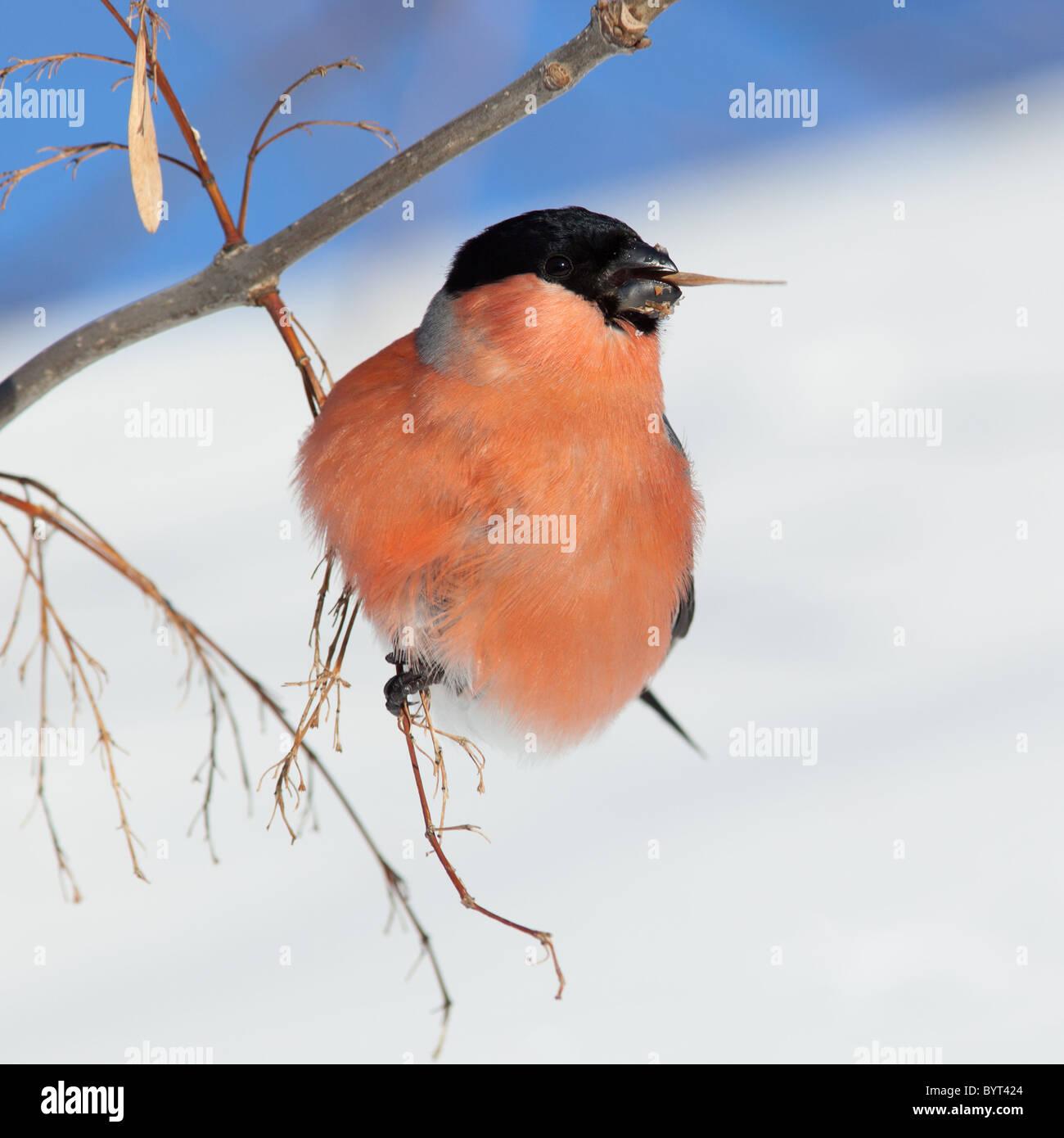 Charmant Vogel Vorlage Ausgeschnitten Bilder - Beispiel ...