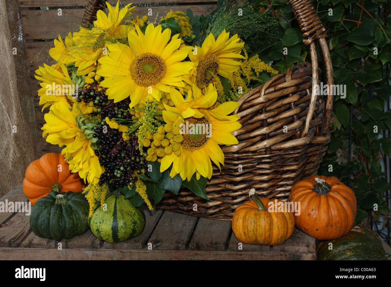 Sonnenblumen Ernten