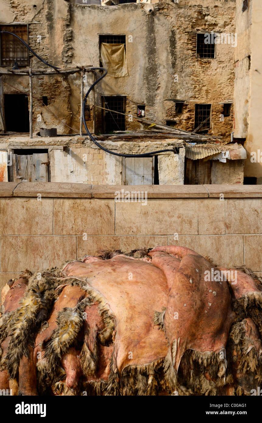 RAW Schaf versteckt gestapelt zur Verarbeitung in der Fes Gerberei Chouara Quartal Fez Marokko Nordafrika Stockbild