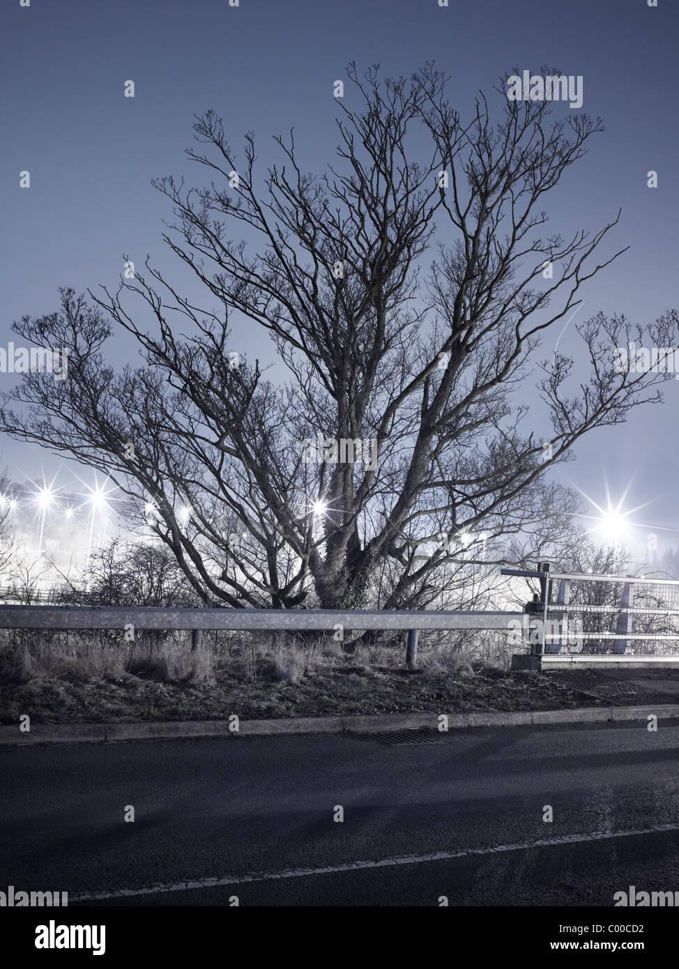 Straßen- und Bäume von Straßenlaternen beleuchtet nachts mit blauem Himmel, am Straßenrand Orten Stockbild