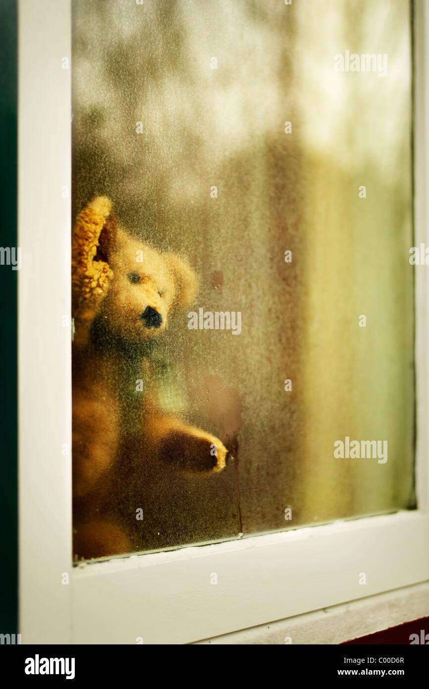 Teddybär schaut aus Fenster Stockbild