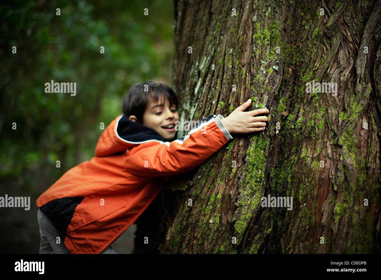 Baum-Liebe. Stockbild
