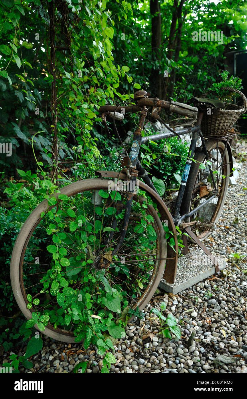 Altes Fahrrad Als Dekoration In Einem Garten Ambiente Jardin Bed