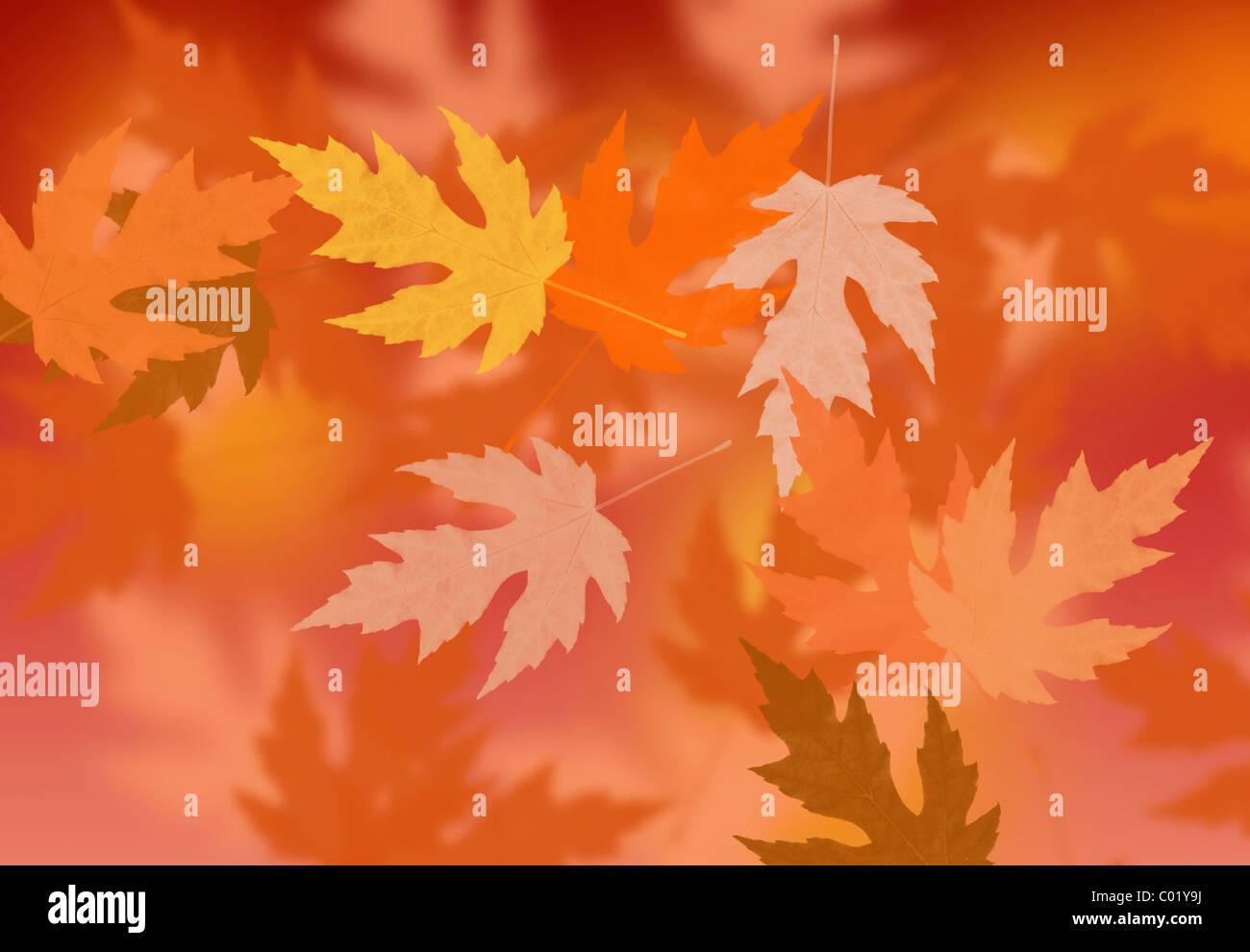 Abstrakte Herbstlaub Stockbild