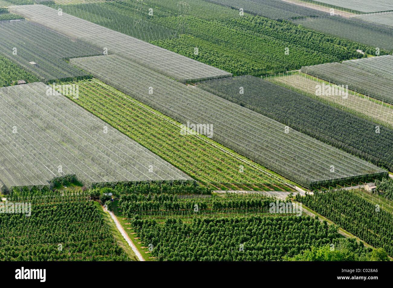 Felder, Obstbau im Eisacktal-Tal in der Nähe von Salurn, Überetsch, Bozner Unterland, Süd-Tirol, Stockbild