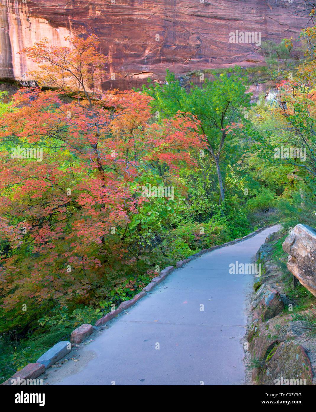 Pfad mit Herbstfarben. Zion Nationalpark, Utah Stockbild