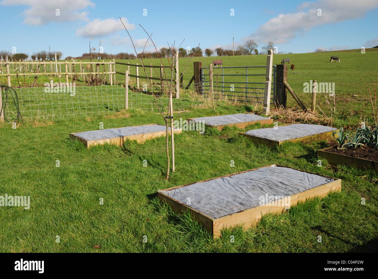 Pflanzlichen Hochbeete Im Gartenbau Vlies Abgedeckt Lincolnshire