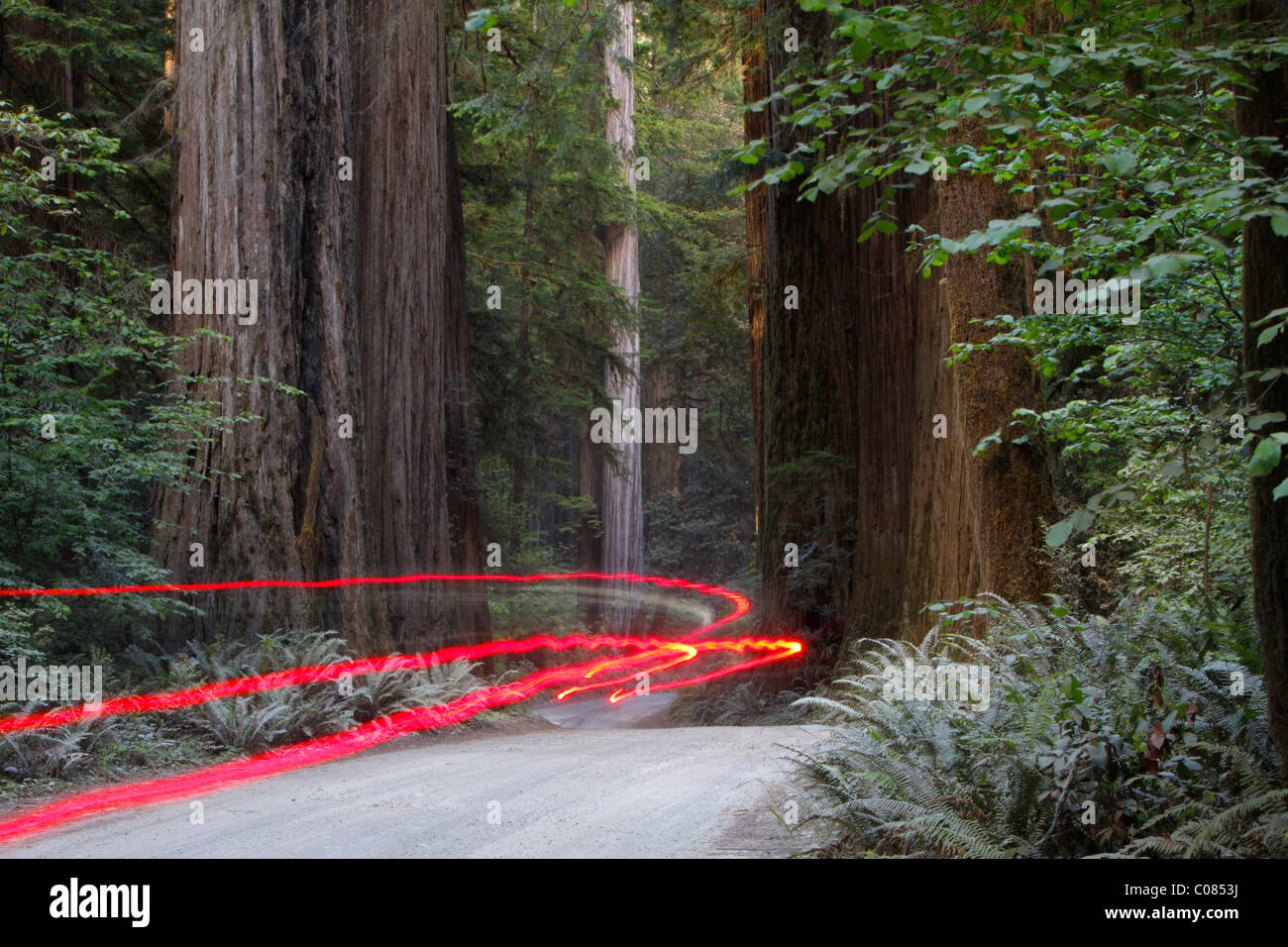 Autolichter auf einer holprigen Straße, Jedediah Redwoods, Kalifornien Küste, Kalifornien, USA Stockbild