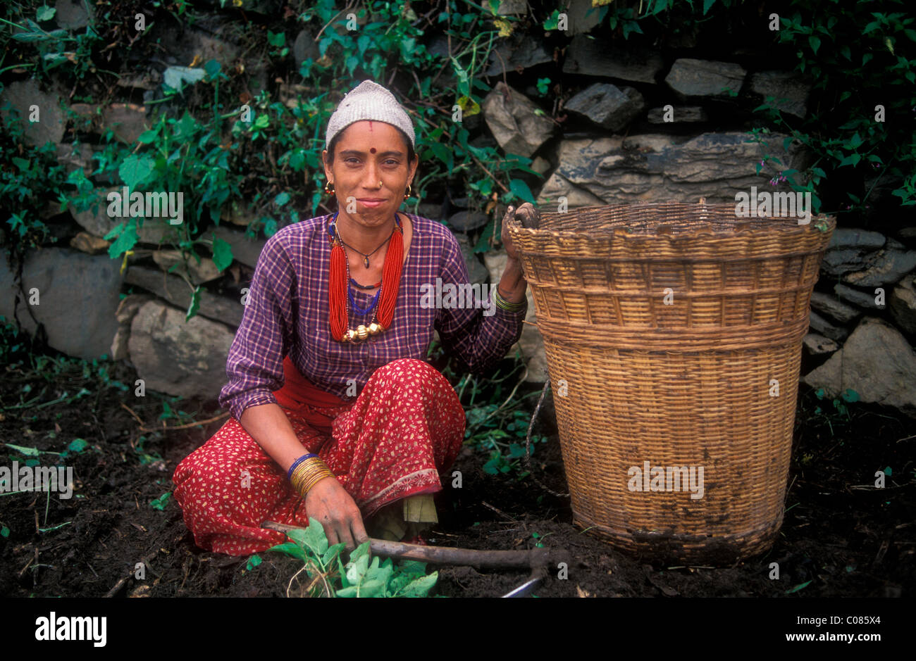 Indische Frau mit Korb auf ihrem Gebiet, Dodi Tal, Volksgruppe der Bhotia, Garhwal Himalaya Kartoffeln ernten Stockbild