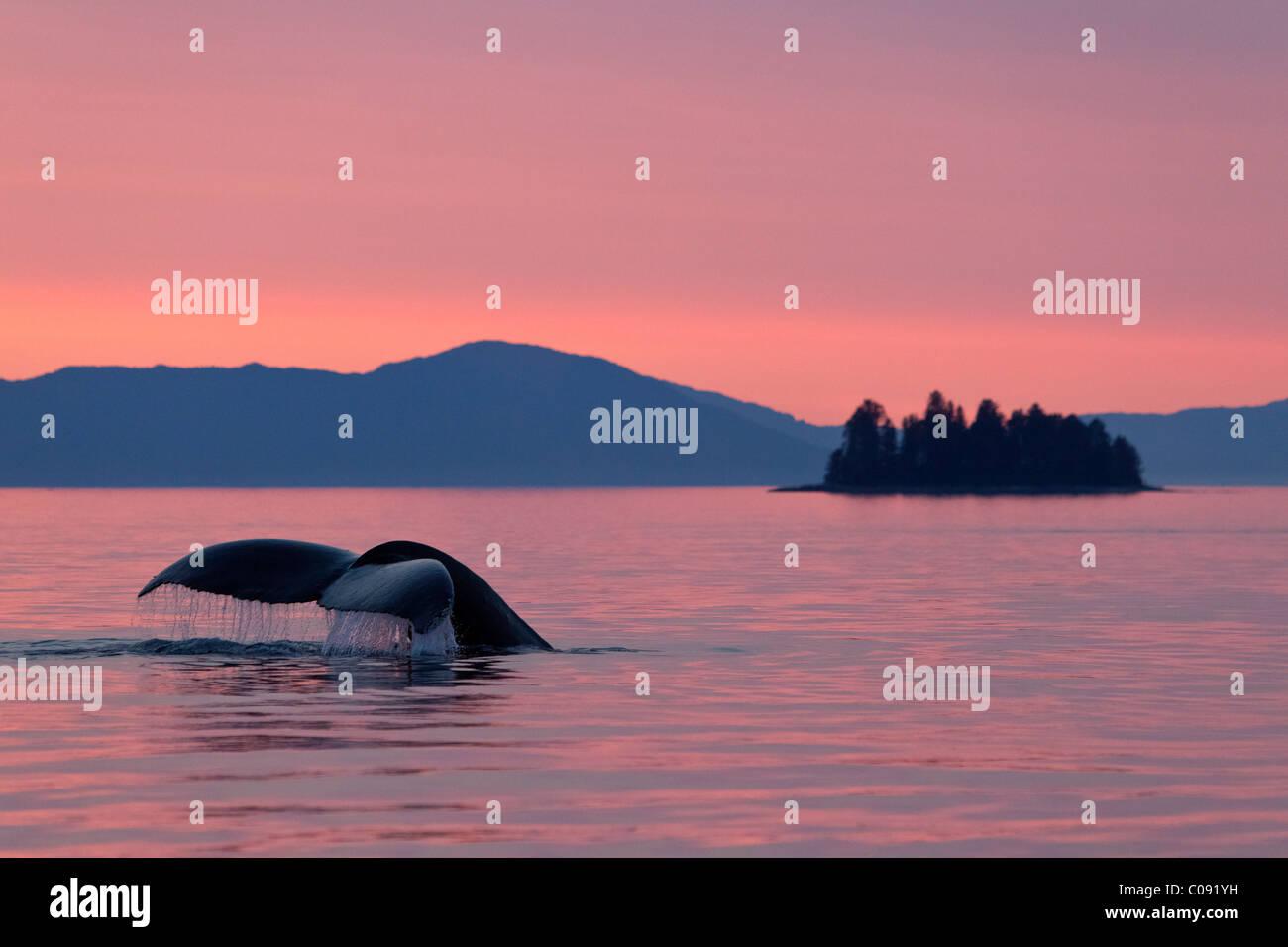 Ein Buckelwal kehrt zurück in die Tiefen des Frederick Sound als die Sonne untergeht, Inside Passage, Alaska Stockbild