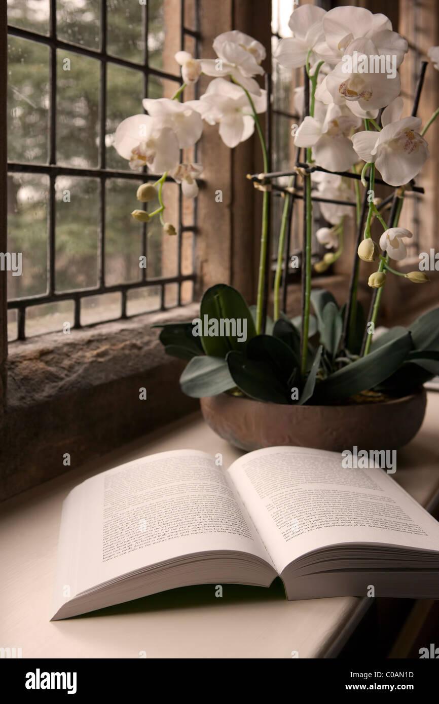 Aufgeschlagene Buch und die Schüssel mit Orchideen am Fenster Stockbild