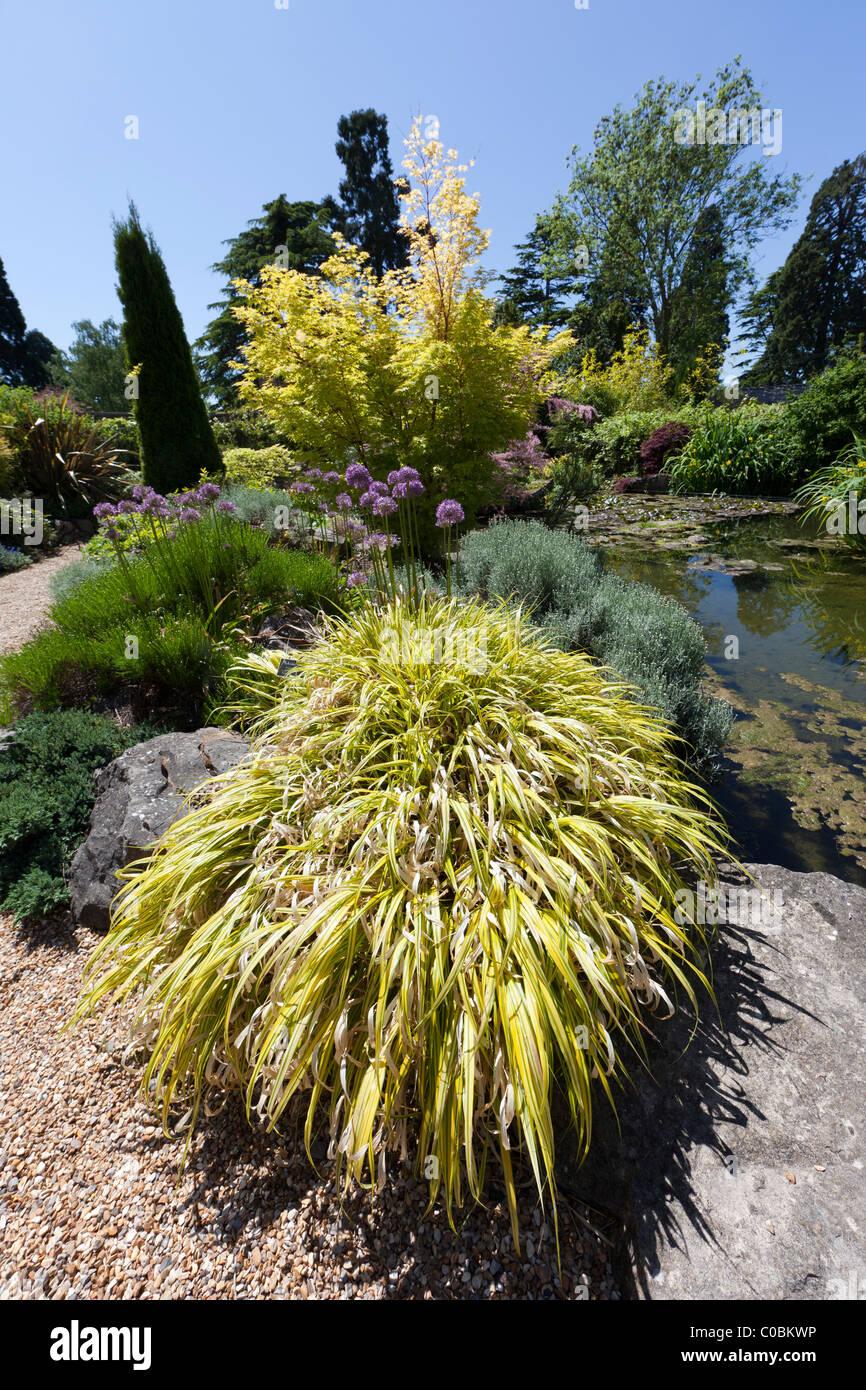 Hakonechloa Macra Sorte Aureola Japanisch bunt Rasen im Garten Dewstow Wales UK Stockbild