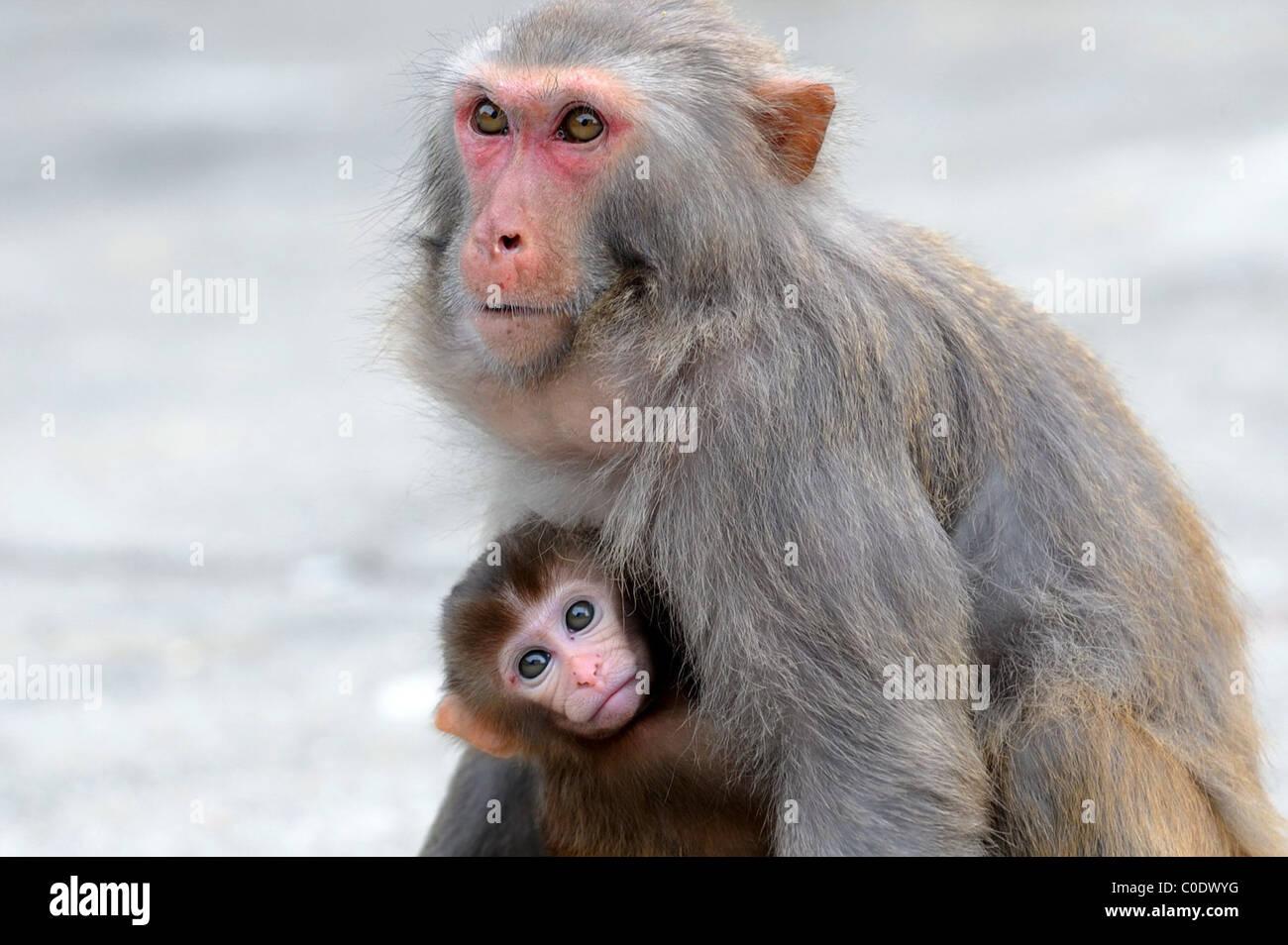Monkey Business Eine Familie Von Affen Entdecken Sie Ihr Neue