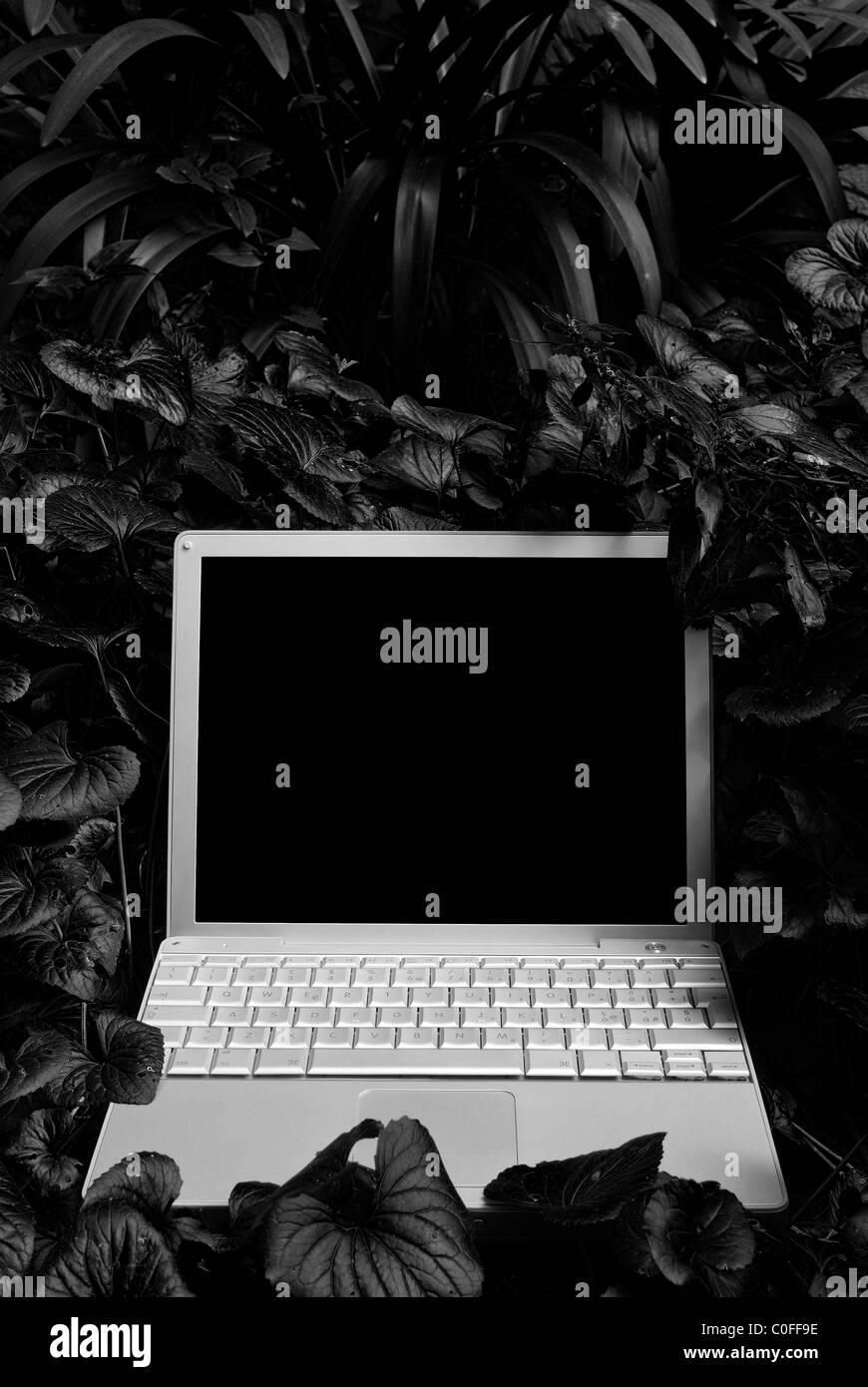 Computer in einem Wald Stockbild
