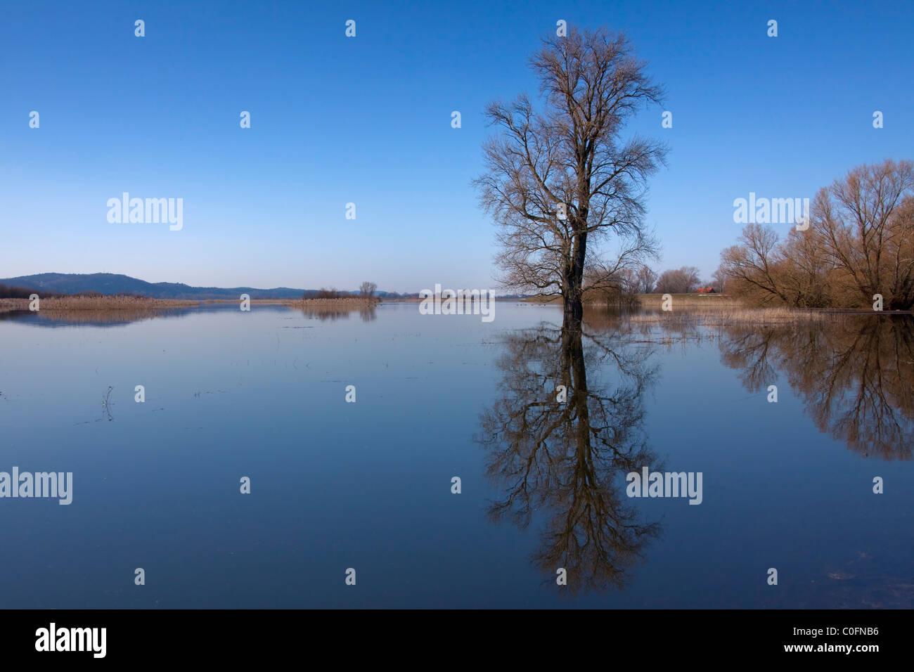 Überschwemmten Wiesen an der Elbe Fluss Landschaft Biosphären-Reservat, Niedersachsen, Germany Stockbild