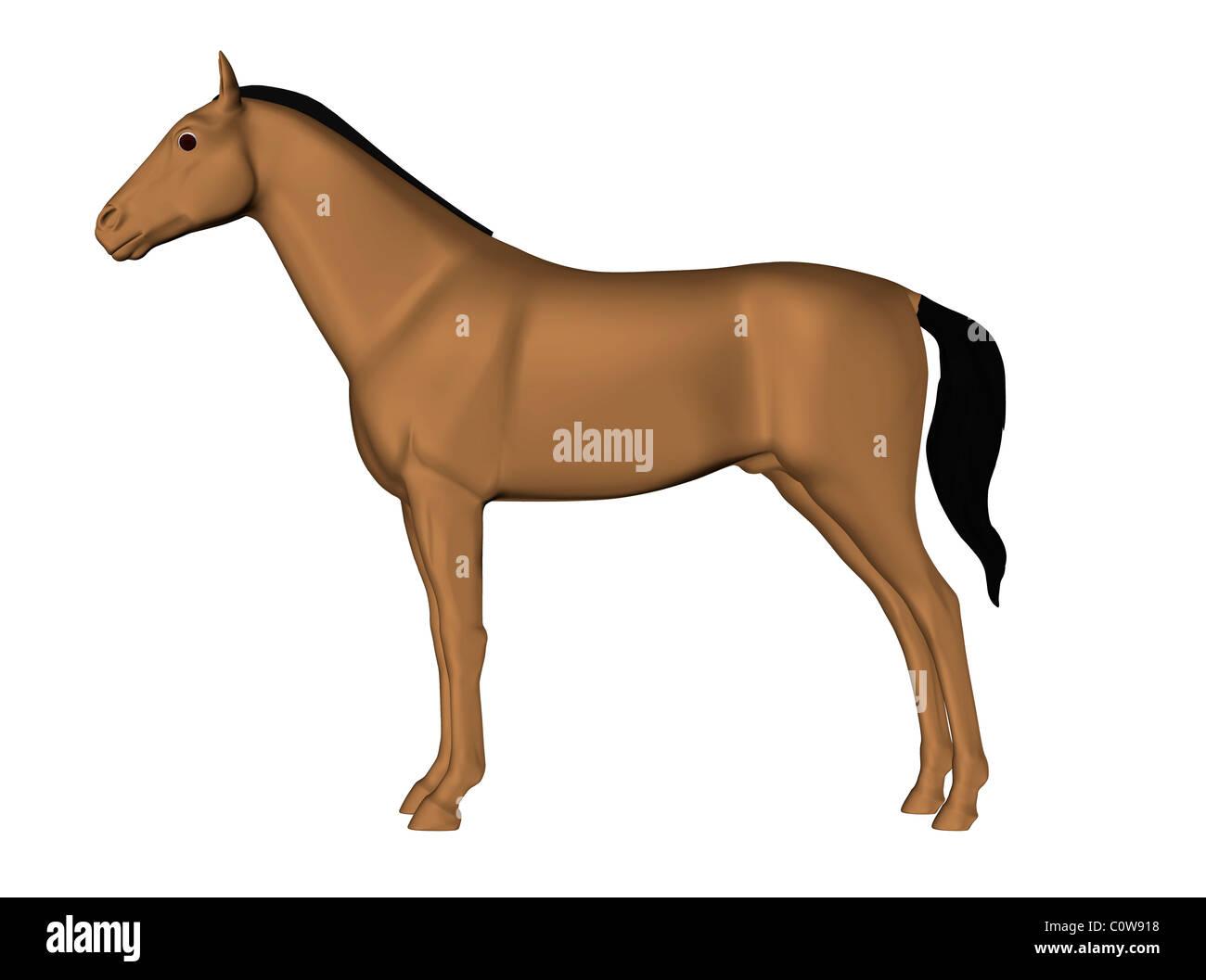 Pferd Anatomie Haut Stockfoto, Bild: 34976628 - Alamy