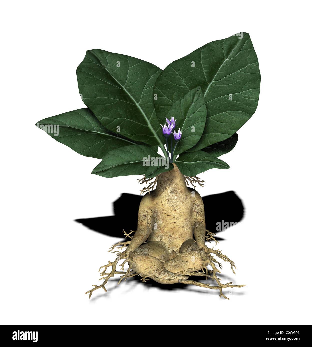 Pflanzenfigur / Werk Abbildung Stockbild